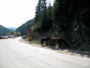 Pferde auf der Straße: meine Ersten.
