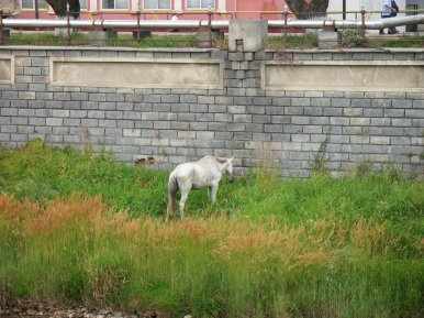 In Vatra Dornei: Ein mageres Pferd am Fluss.