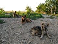 Unsere Wachhunde.