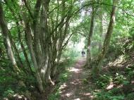 Zwischendruch ein Wald...