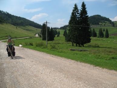 Magda mit ihrer Hirtenhundbewachung.