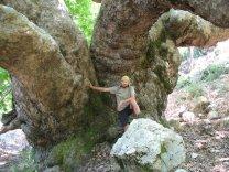 Mmh, mein Baum!