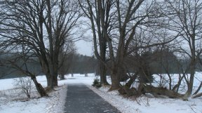 Lichtung im Böhmerwald.