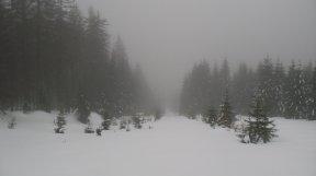Unberührter Schnee - mein Weg.