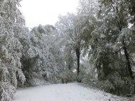 Winterlicher Odenwald