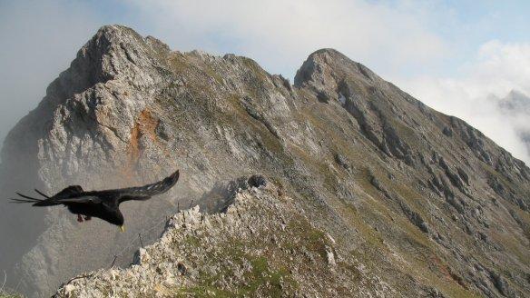 Mittenwalder Höhensteig - IMG_9844